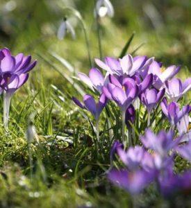 3raumGärtner Frühling